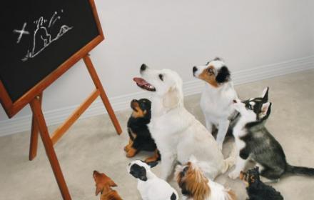 puppy, cursus, krantbezorger,
